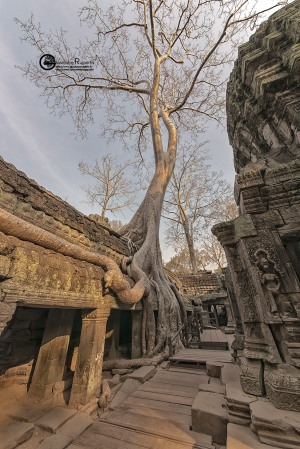 90-cambogia-2019-016