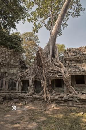 99-cambogia-2019-119-CO