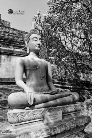 thailandia-2019-109
