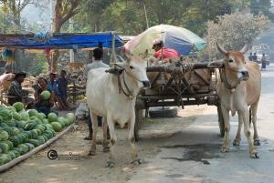 birmania-2009-08