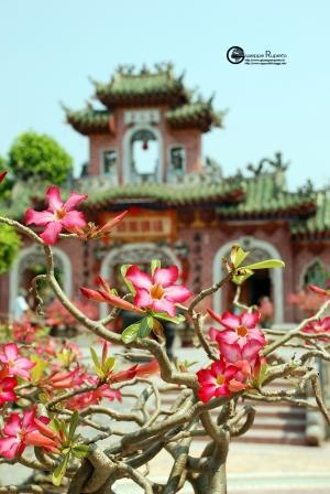 Vietnam105